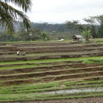 Jatiluwih Unesco protected rice fields